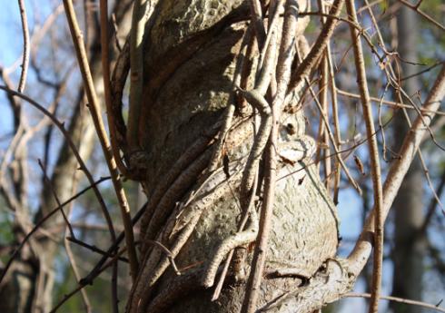 gnarled_tree